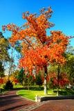 Träden i höstfärger Arkivbilder