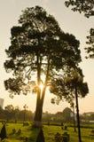 Träden i parkera Arkivbild