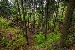 Träden i skog royaltyfri fotografi