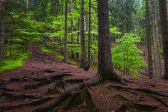 Träden i skog royaltyfria foton
