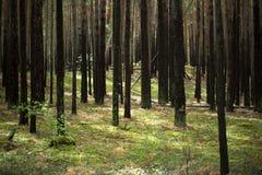 Träden i skogen Royaltyfri Foto