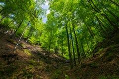 Träden i skogen royaltyfri bild