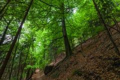 Träden i skogen arkivbilder