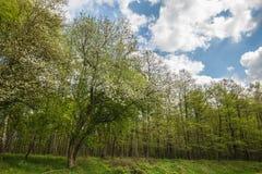 Träden i skogen royaltyfria bilder