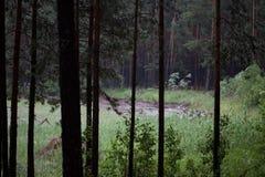 Träden i skogen Fotografering för Bildbyråer