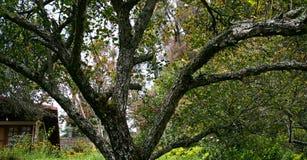 Träden i trädgården Royaltyfri Fotografi