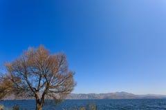 Träden i vatten Royaltyfria Foton