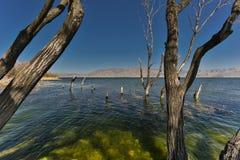 Träden i vatten Arkivfoton