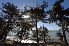 Träden mot inställningssolen och havet Fotografering för Bildbyråer