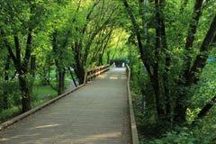 Träden och bron Royaltyfri Foto