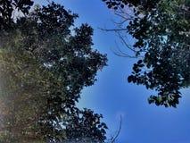 Träden och himlen Arkivbilder