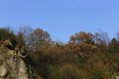Träden och växterna på överkanten av kullen Arkivbild