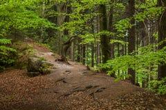 Träden och vaggar i skogen royaltyfria bilder