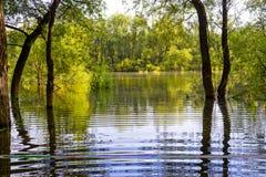 Träden och vattnet Arkivfoto