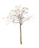 Träden som isoleras på vit bakgrund Arkivfoto