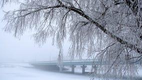Träden som täckas med frost bron i dimman i bakgrunden Arkivbilder