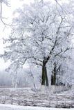 Träden täckas med rimfrost i fältet arkivbild