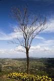 Träden, väntande på uppståndelse till liv, varje liv Arkivbilder
