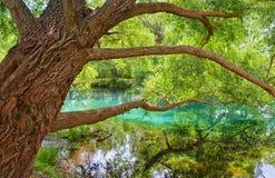Trädet är floden Arkivfoton