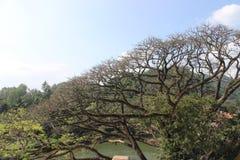 Trädet över floden Arkivbild