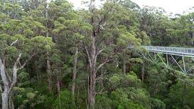Trädet överträffar gångbanan på Walpole västra Australien i höst Fotografering för Bildbyråer