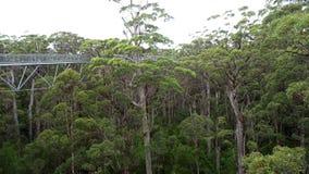 Trädet överträffar gångbanan på Walpole västra Australien i höst Arkivbild