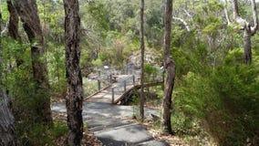 Trädet överträffar gångbanan på Walpole västra Australien i höst Arkivfoton