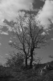 Trädet - 1 Arkivbilder