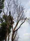 Trädet av döda royaltyfri bild
