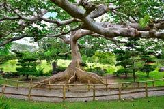 Trädet av kunskap Arkivbilder