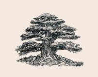 Trädet av liv Royaltyfri Fotografi