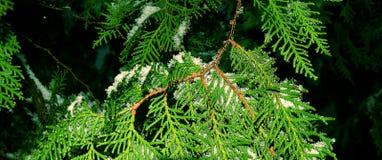 Trädet av liv Royaltyfria Bilder
