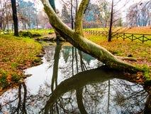 Trädet böjde över vatten Arkivfoto