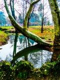 Trädet böjde över vatten Arkivbilder