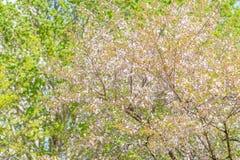 Trädet blomstrar i vår under en blå himmel arkivbild