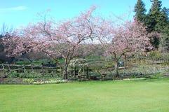 Trädet blomstrar på blom på Butchart trädgårdar i Victoria Arkivbilder
