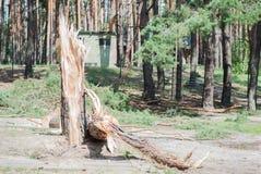 Trädet bröt från en stark vind arkivbild