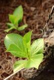 Trädet bredvid de gröna växterna Royaltyfri Fotografi