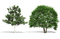 trädet 3d framför på vit bakgrund Royaltyfri Bild