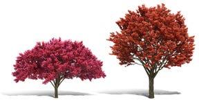 trädet 3d framför på vit bakgrund Arkivbild