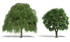 trädet 3d framför på vit bakgrund Arkivbilder