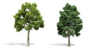 trädet 3d framför på vit bakgrund Arkivfoton