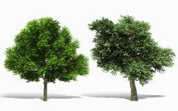 trädet 3d framför på vit bakgrund Royaltyfri Foto
