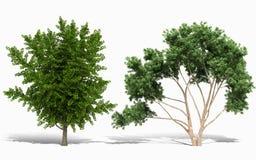 trädet 3d framför på vit bakgrund Arkivfoto