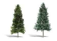 trädet 3d framför på vit bakgrund Royaltyfri Fotografi