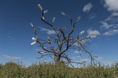 Trädet för vattenflaska Arkivbilder