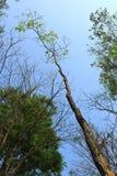 Trädet förgrena sig och sidor mot bakgrunden av himlen Royaltyfri Fotografi