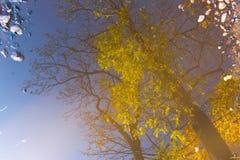 Trädet filialer, lämnar reflexion i pölen Abstrakt begrepp konstnärligt begrepp Arkivfoton