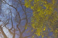 Trädet filialer, lämnar reflexion i pölen Abstrakt begrepp konstnärligt begrepp Fotografering för Bildbyråer