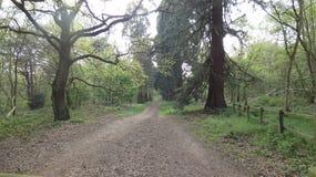 Trädet fodrade avenyn på det Havering landet parkerar 2 royaltyfri foto